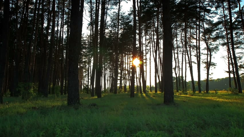 Forest at dawn. Timelapse shot motorized slider.  | Shutterstock HD Video #1340878