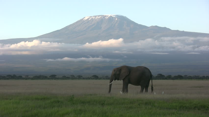 Elephant feeding beneath Mount Kilimanjaro mountain