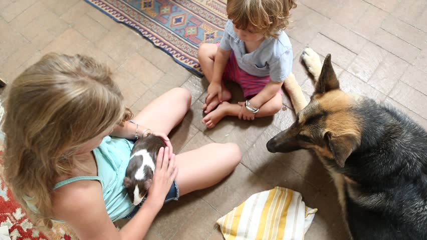 Pre-teen Girl Holding Pet Hamster: Video de stock (totalmente libre de regalías) 13593893 | Shutterstock