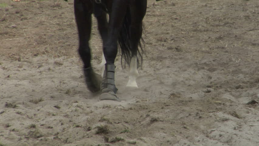 Closeup slow motion of horse  #1365043