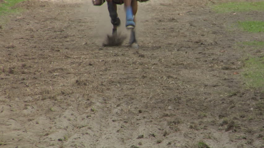 Closeup slow motion of horse during a competition #1365055