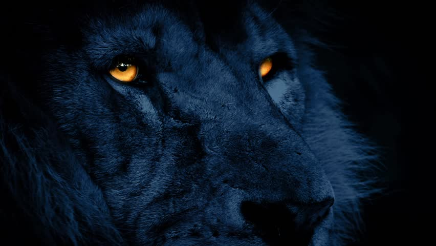 Lion Face At Night With Glowing Eyes #13847843
