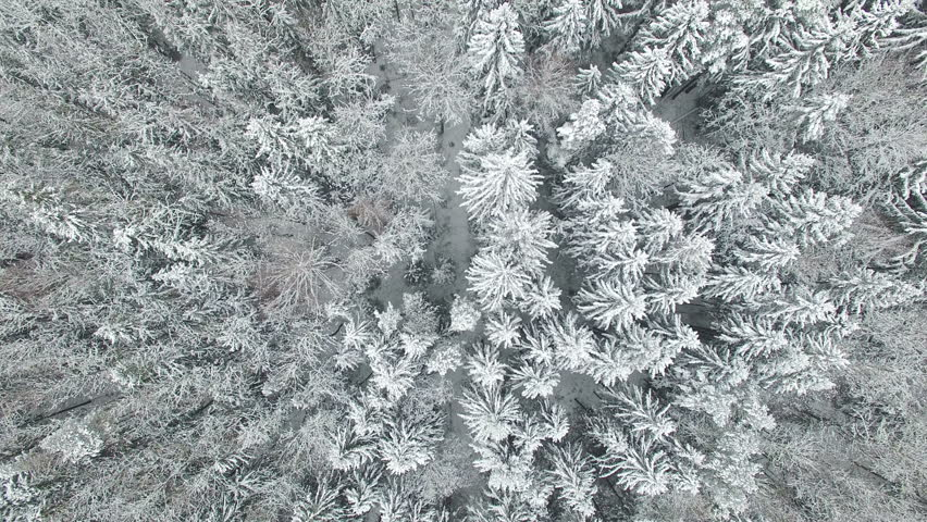 4K. Flight above winter forest on the north, aerial top view. | Shutterstock HD Video #13929956