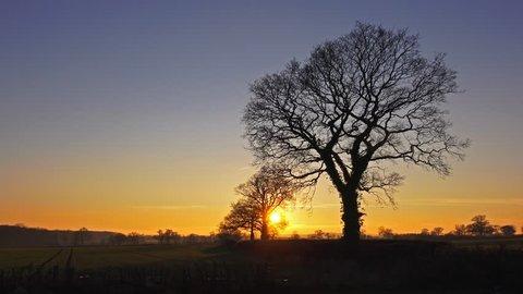 English Landscape - sunset to twilight with oak trees timelapse - 02666698