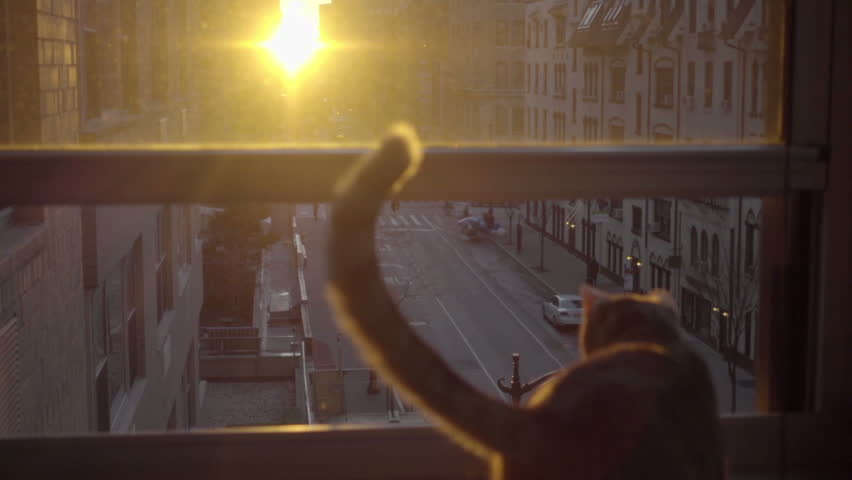 Cat and tail silhouette watching sunrise in Manhattan apartment in NYC | Shutterstock HD Video #14022317