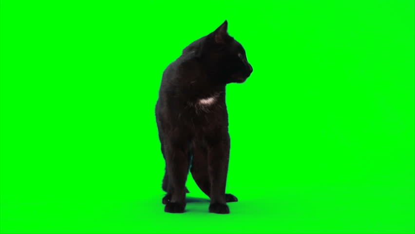 Black male cat stands, sits down and starts to wash itself.
