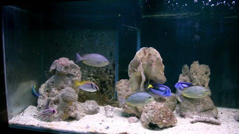 KO SAMUI, THAILAND, MARCH 2009: Colorful fishes swimming in an aquarium