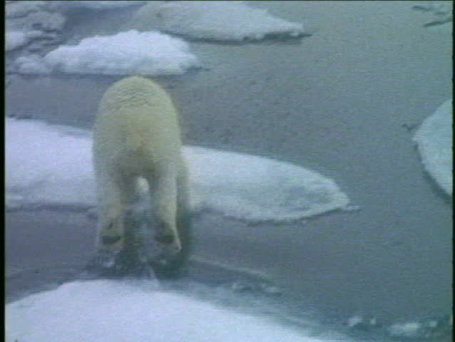 A polar bear runs across ice floes.
