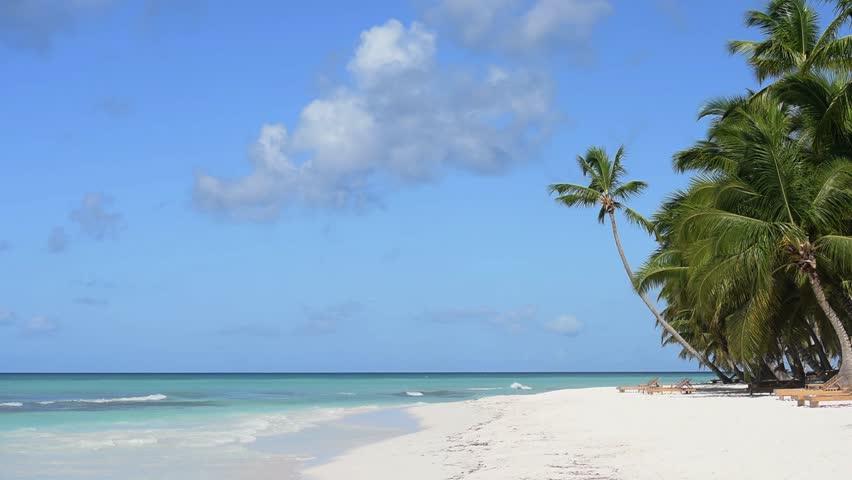 Palm trees beach white sand   Shutterstock HD Video #14308702