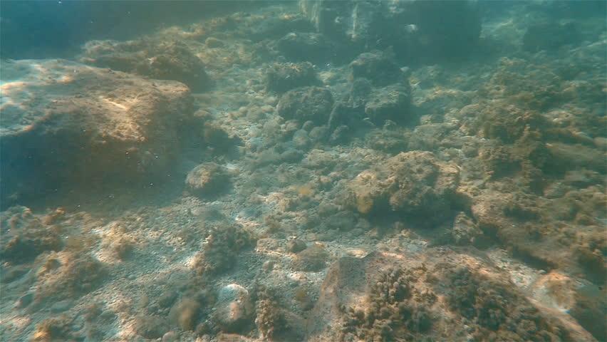 Undersea stones ray   Shutterstock HD Video #14312197