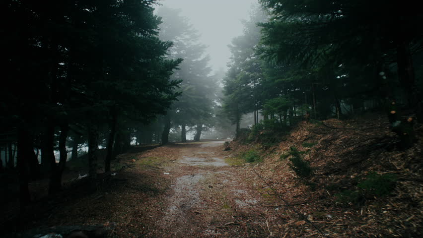4K Trekking/walking on mountain forest dirt path at winter.4K UHD stabilized/gimbal pov shot of someone walking through a beautiful mountain forest dirt road/path in heavy mist and fog. | Shutterstock HD Video #14422501
