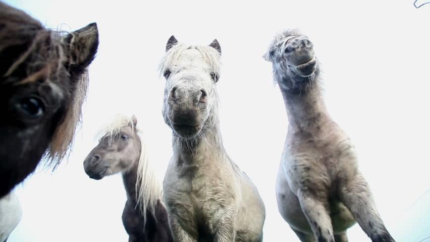 Ponies in morning fog | Shutterstock HD Video #1444240