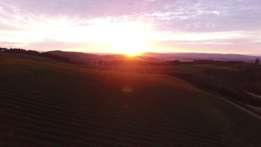 Aerial view of vineyard, Willamette Valley Oregon | Shutterstock HD Video #14489236