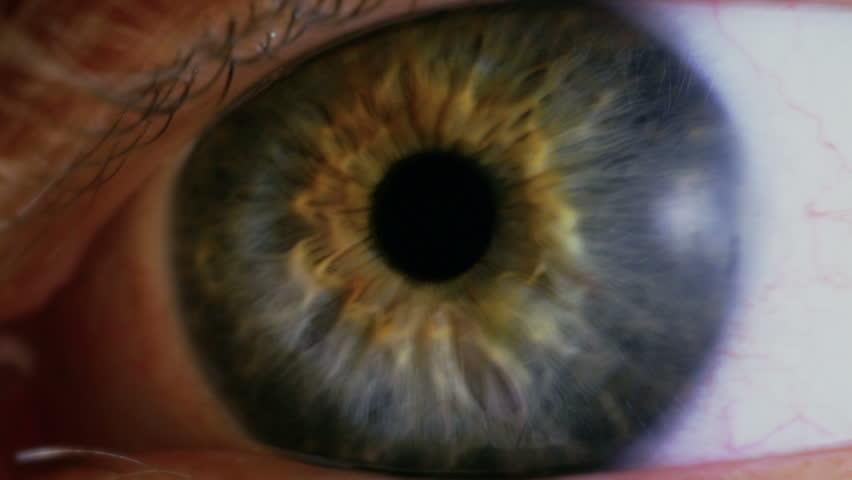 Human eye iris contracting. Close up. | Shutterstock HD Video #14563354
