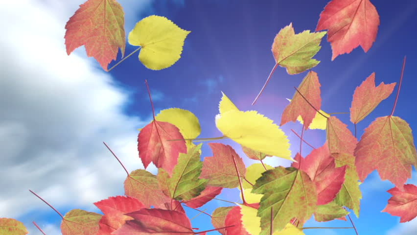 Colorful Autumn leaves fall from a beautiful blue sun filled sky. Big white clouds.