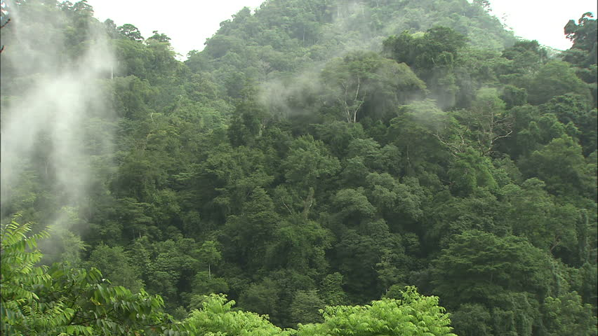 Costa Rican Jungle Scape With Misty Clouds Moving By