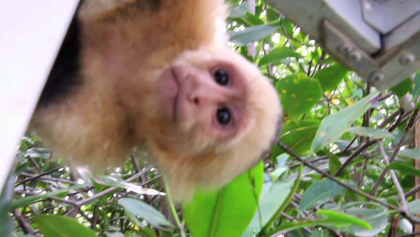 Curious monkey in the jungle