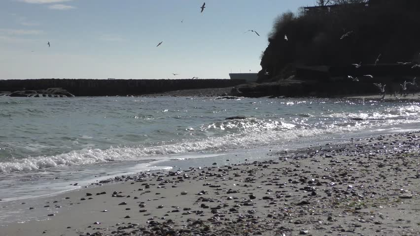 Seagulls over the sea beach line with rocks and sand | Shutterstock HD Video #14794654
