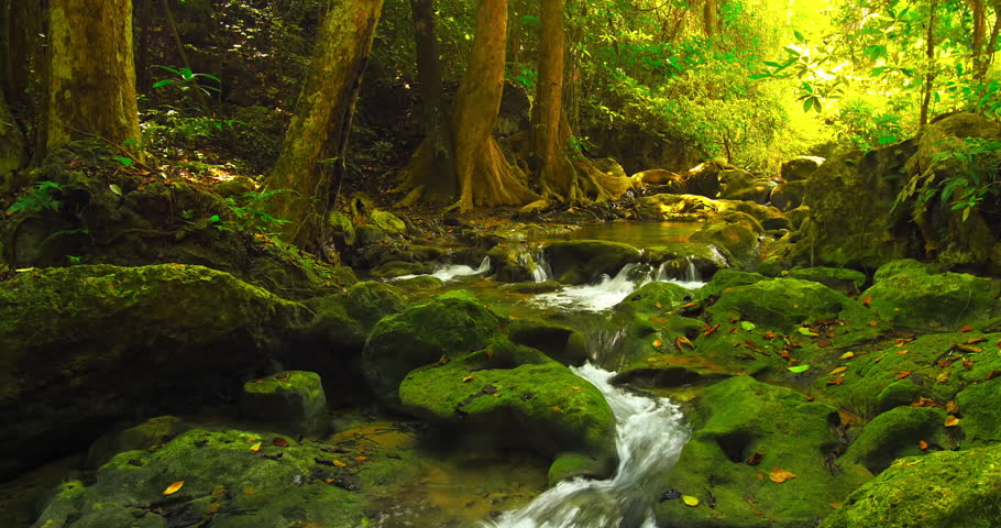 Deep forest beautiful nature 4K background. Water stream flows among mossy rocks | Shutterstock HD Video #14861746