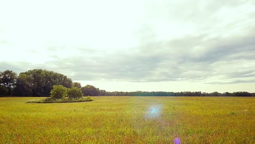 Grass field landscape in slowmotion. 1920x1080. hd | Shutterstock HD Video #14993821
