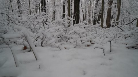 Low angle view of beautiful snow covered plants in forest edge