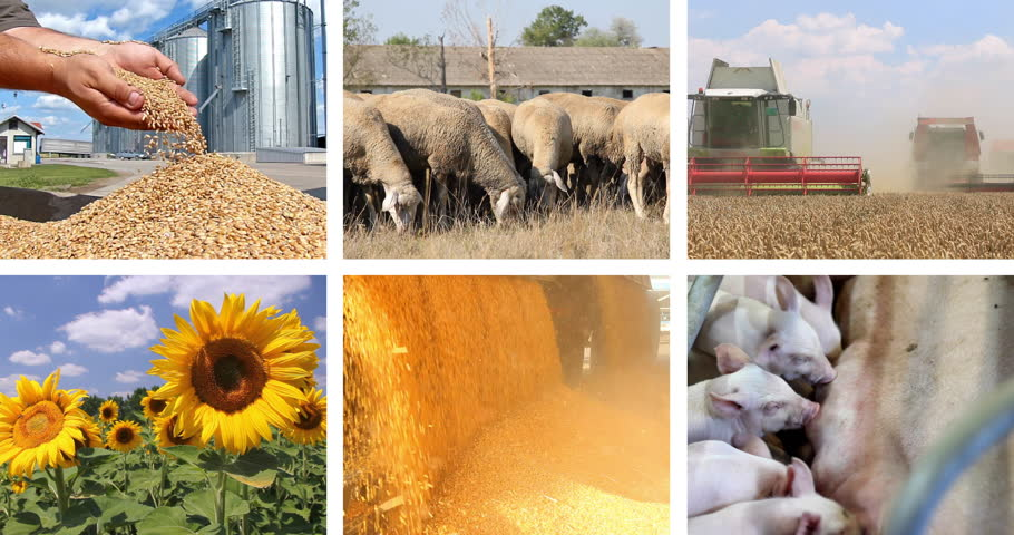 Картинки по растениеводству и животноводству