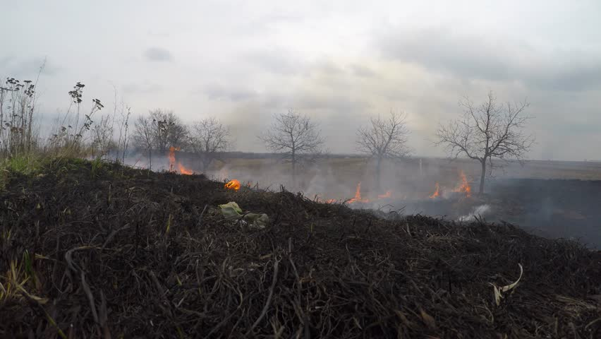 Fire in the field, farm. A lot of smoke. Burned grass in the foreground.   Shutterstock HD Video #15162688