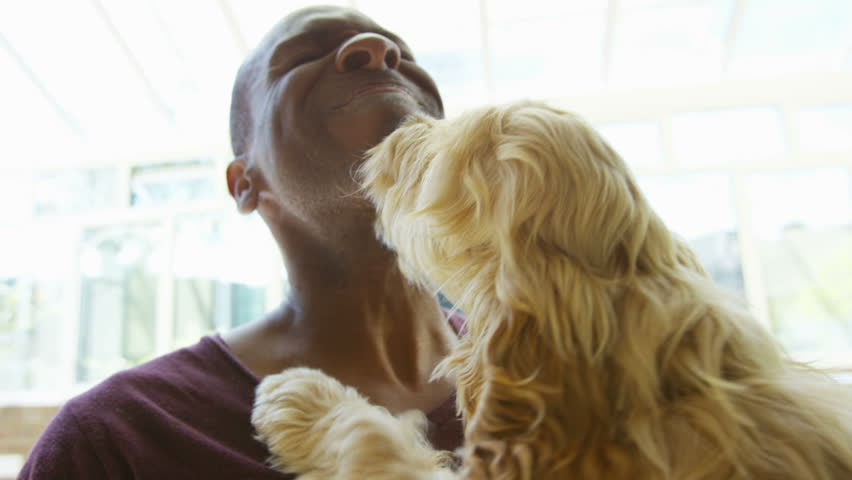 4K Man relaxing at home with playful puppy licking his face. #15192220