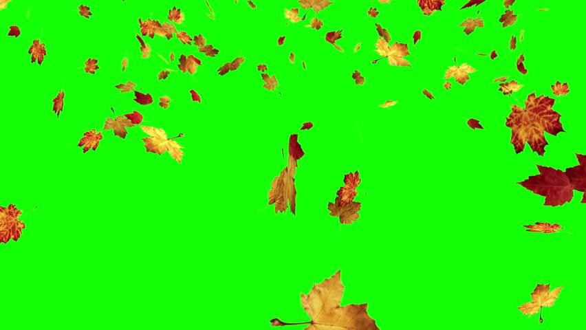 Falling Leaves On Green Screen Stock Footage Video 100 Royalty Free 15235549 Shutterstock