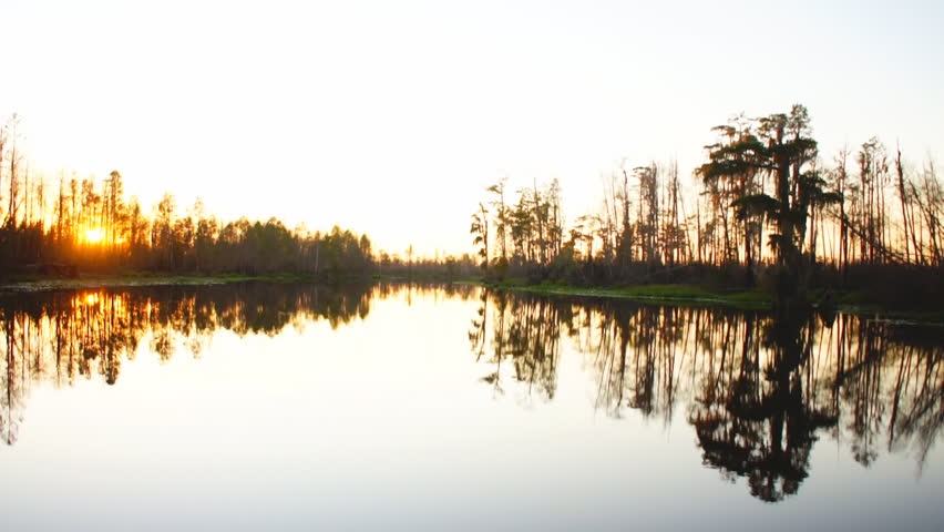 Cypress swamp in southern United States