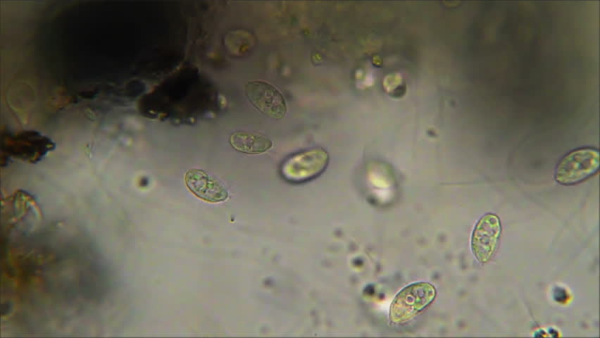 Header of Protozoa