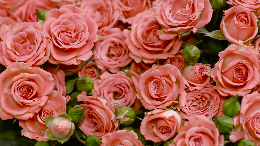 Big Bouquet Of Pink Roses Stock Footage Video 100 Royalty Free