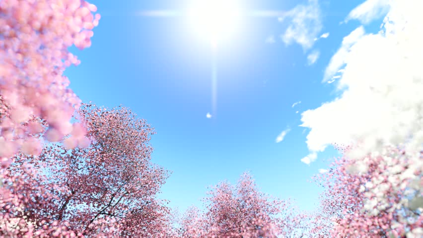 Animation of sakura with flowers sakura waving on wind