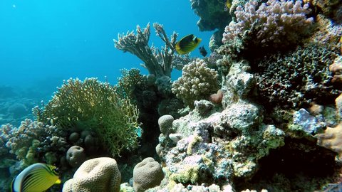 Coral reef. Exotic fishes. The beauty of the underwater world. Life in the ocean. Diving on a tropical reef. Submarine life. Clear water. Fish of the coral reef.