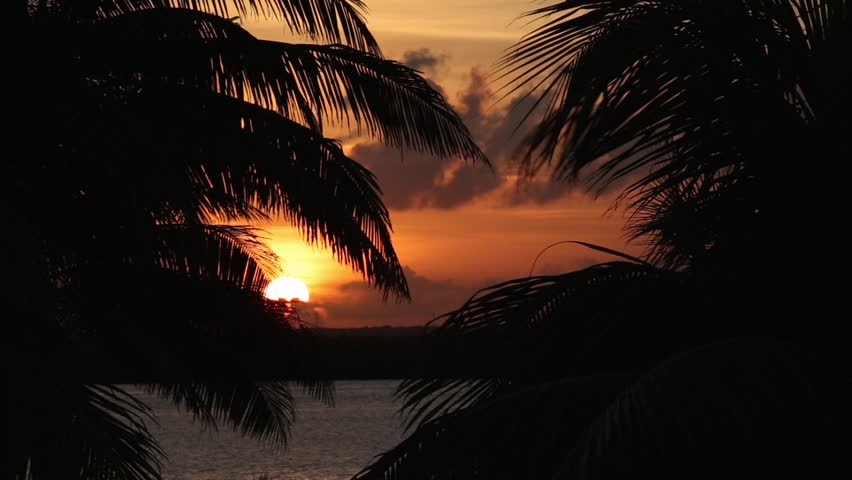 Sunset through palm tree leafs silhouette    Shutterstock HD Video #15373663