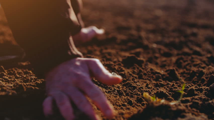 Farmer holding soil i hands. Man hands touching soil on field. Farmer is checking soil quality before sowing wheat.