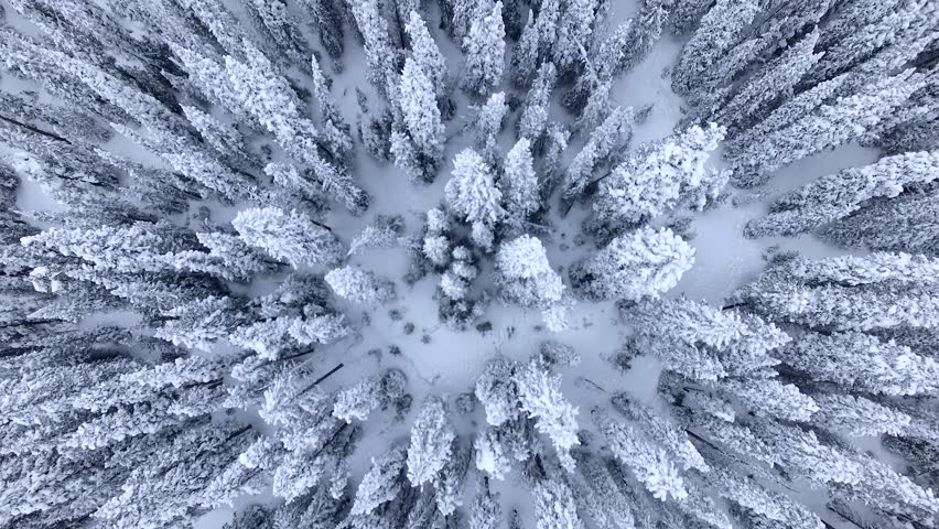 Beautiful Snow-Covered Evergreens. Aerial/Drone Footage of a Blizzard Aftermath near Breckenridge. Colorado Rocky Mountains #15970414