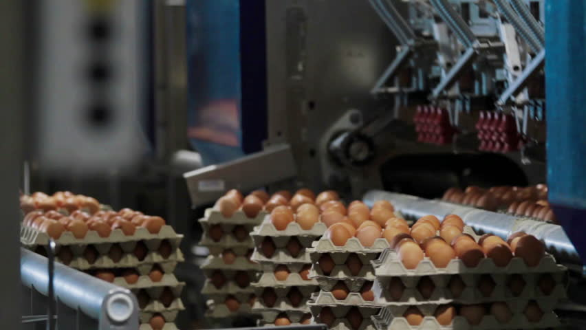 Eggs automated sorting in factory