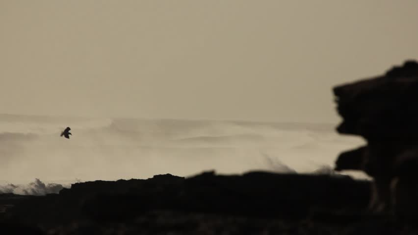 Waves crashing on rocky shore of morocco seegull  and big angry waves.  extreme wave crushing coast beautiful black white composition. Nature and force of nature in amazing spectacle of elements.   Shutterstock HD Video #16124191