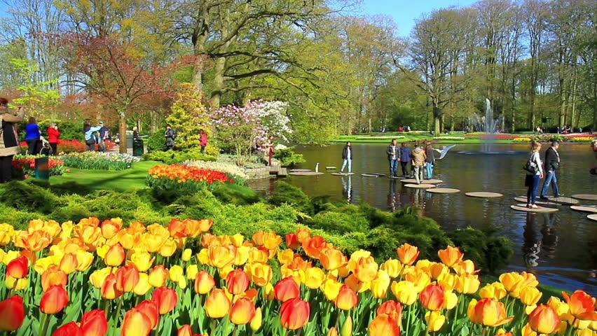 будто предназначена нидерланды апрель фото размножения вольчего корня