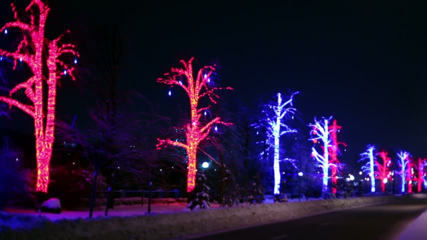 Trees are decorated with garlands stand along road