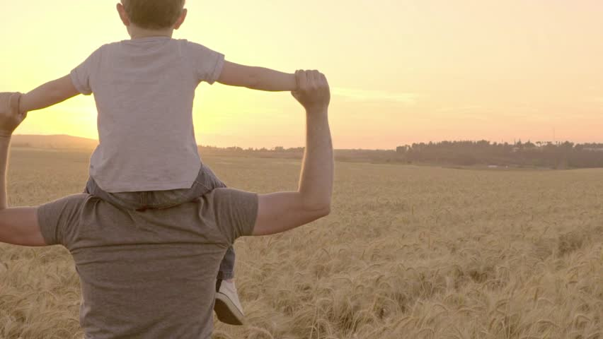 A Father Carries His Son on His Shoulders Walking Through a Wheatfield During a Sunset - Slow Motion | Shutterstock HD Video #16261726