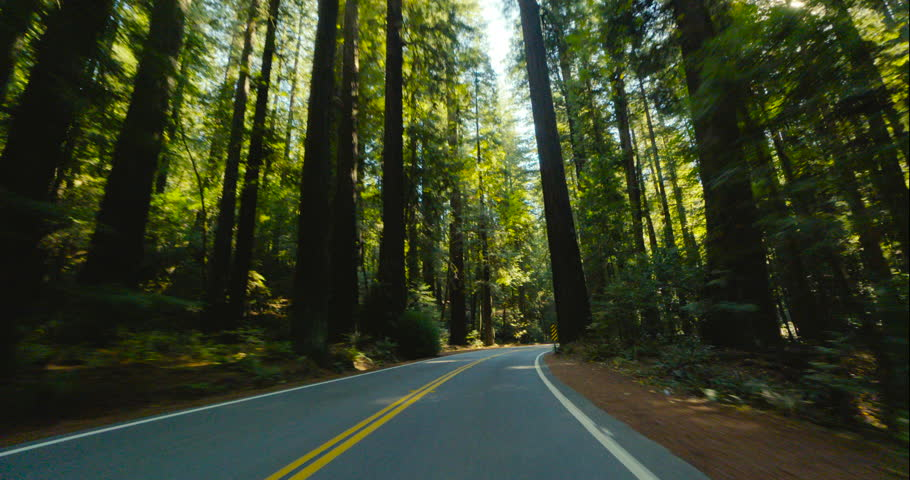 4K driving through a redwood forest in slow motion. Avenue of the Giants, Humboldt Redwoods State Park, Northern California. Sunlight shines through tall trees.