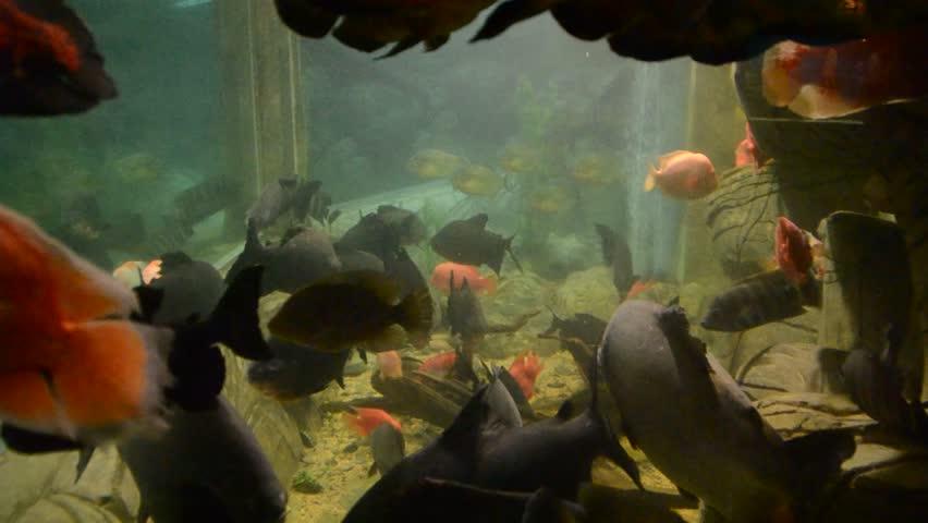 Fish | Shutterstock HD Video #1628617