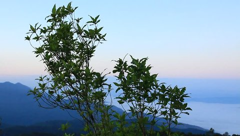 Trees on the mountain.