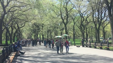 THE MALL, CENTRAL PARK, NEW YORK CITY - APRIL 2016: People walking down through the Mall and Literary Walk in the Park in Manhattan people visible. Elms form canopy above Park's pedestrian pathway.