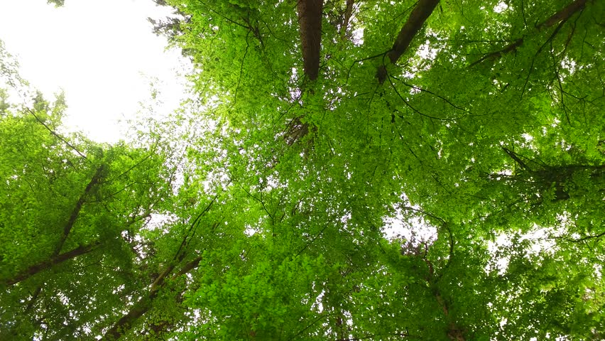 Beautiful spring tree crowns. | Shutterstock HD Video #16574425