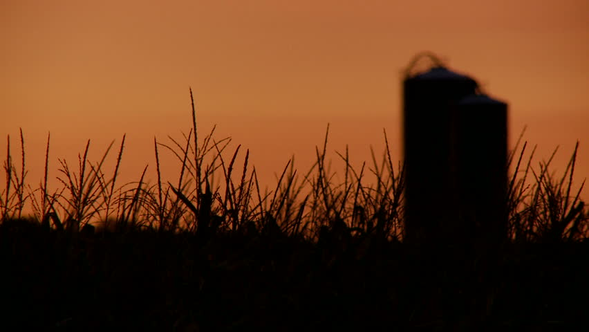Focus shifts from silhouetted cornfield to silo against sunrise