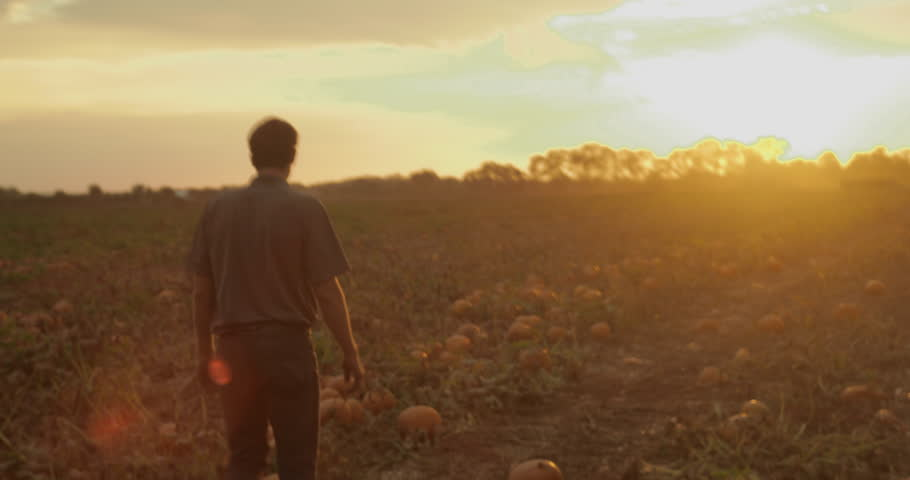 Chicago, IL - October 2015: A man walks around a pumpkin patch on his farm in the gleaming sunset | Shutterstock HD Video #16654987