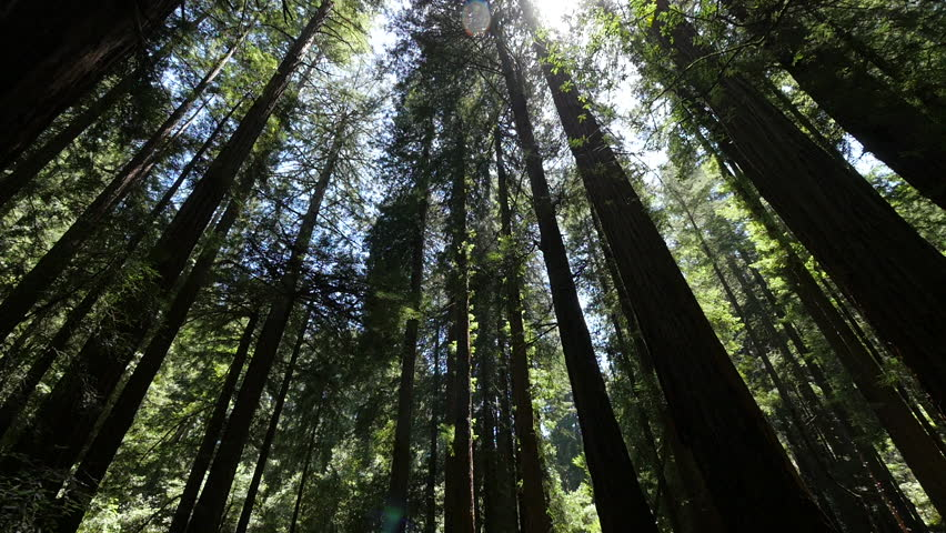Forest trees and sunlight dolly moving low angle shot | Shutterstock HD Video #16767670